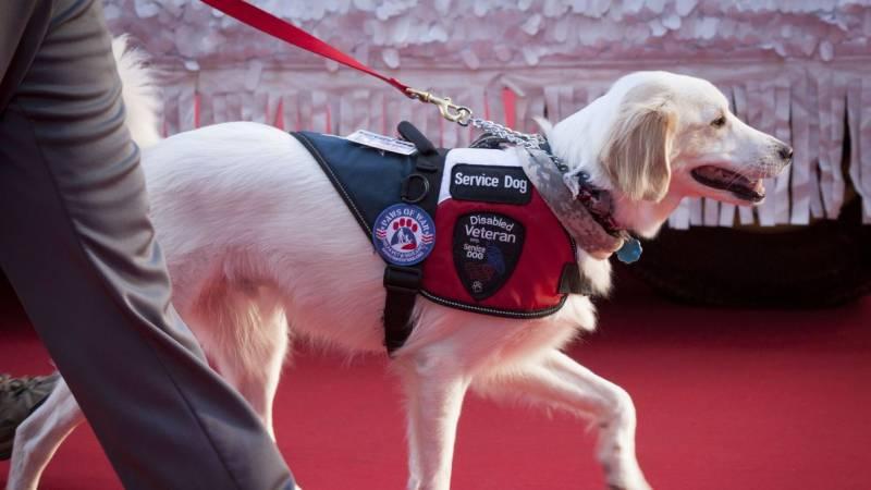 How To Register Your Dog As A Service Dog Nation Com