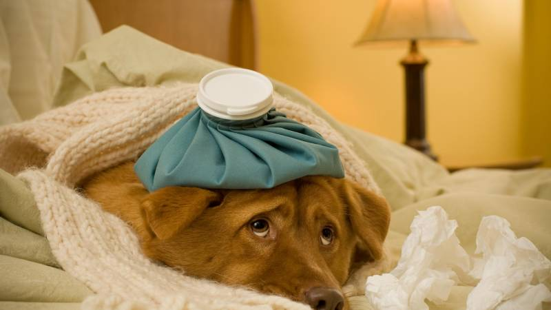 Could Your Pet Catch This Year's Dangerous Flu?