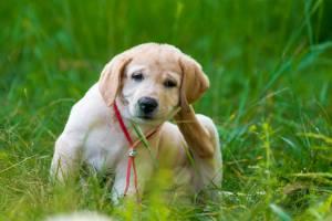 How to Register Your Dog as a Service Dog - Nation com
