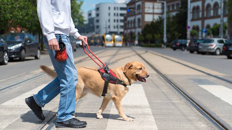 How to Register Your Dog as an Assistance Dog