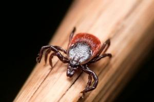 important-things-to-know-about-ticks